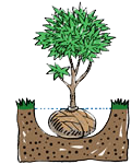 plant-a-tree_balled-hole