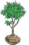 plant-a-tree_balled