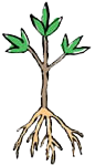 plant-a-tree_bare-root