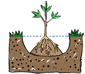 plant-a-tree_bare-root_hole